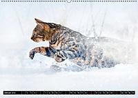 Bengalen Outdoor und Action (Wandkalender 2019 DIN A2 quer) - Produktdetailbild 1