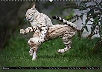 Bengalen Outdoor und Action (Wandkalender 2019 DIN A2 quer) - Produktdetailbild 5