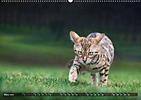 Bengalen Outdoor und Action (Wandkalender 2019 DIN A2 quer) - Produktdetailbild 3