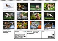 Bengalen Outdoor und Action (Wandkalender 2019 DIN A2 quer) - Produktdetailbild 13
