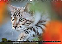 Bengalen Outdoor und Action (Wandkalender 2019 DIN A3 quer) - Produktdetailbild 11