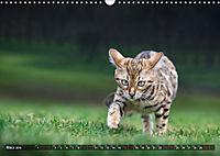 Bengalen Outdoor und Action (Wandkalender 2019 DIN A3 quer) - Produktdetailbild 3