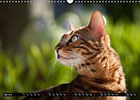 Bengalen Outdoor und Action (Wandkalender 2019 DIN A3 quer) - Produktdetailbild 7
