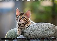 Bengalen Outdoor und Action (Wandkalender 2019 DIN A3 quer) - Produktdetailbild 6
