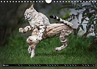 Bengalen Outdoor und Action (Wandkalender 2019 DIN A4 quer) - Produktdetailbild 5