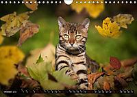 Bengalen Outdoor und Action (Wandkalender 2019 DIN A4 quer) - Produktdetailbild 10
