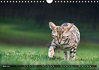 Bengalen Outdoor und Action (Wandkalender 2019 DIN A4 quer) - Produktdetailbild 3