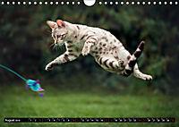 Bengalen Outdoor und Action (Wandkalender 2019 DIN A4 quer) - Produktdetailbild 8