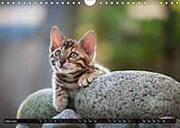Bengalen Outdoor und Action (Wandkalender 2019 DIN A4 quer) - Produktdetailbild 6
