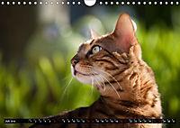 Bengalen Outdoor und Action (Wandkalender 2019 DIN A4 quer) - Produktdetailbild 7