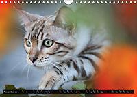 Bengalen Outdoor und Action (Wandkalender 2019 DIN A4 quer) - Produktdetailbild 11