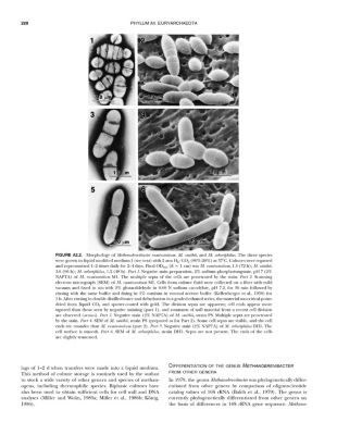 Bergey's Manual of Systematic Bacteriology: Vol.1 The