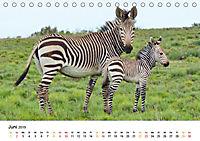 BERGZEBRAS Impressionen aus Südafrika (Tischkalender 2019 DIN A5 quer) - Produktdetailbild 6