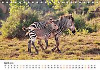 BERGZEBRAS Impressionen aus Südafrika (Tischkalender 2019 DIN A5 quer) - Produktdetailbild 4