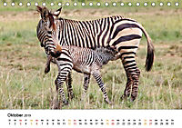 BERGZEBRAS Impressionen aus Südafrika (Tischkalender 2019 DIN A5 quer) - Produktdetailbild 10