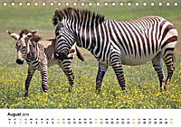 BERGZEBRAS Impressionen aus Südafrika (Tischkalender 2019 DIN A5 quer) - Produktdetailbild 8