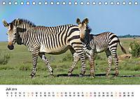BERGZEBRAS Impressionen aus Südafrika (Tischkalender 2019 DIN A5 quer) - Produktdetailbild 7