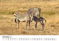 BERGZEBRAS Impressionen aus Südafrika (Tischkalender 2019 DIN A5 quer) - Produktdetailbild 11