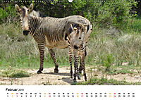 BERGZEBRAS Impressionen aus Südafrika (Wandkalender 2019 DIN A2 quer) - Produktdetailbild 2