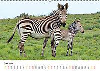 BERGZEBRAS Impressionen aus Südafrika (Wandkalender 2019 DIN A2 quer) - Produktdetailbild 6