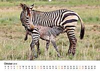 BERGZEBRAS Impressionen aus Südafrika (Wandkalender 2019 DIN A2 quer) - Produktdetailbild 10