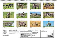 BERGZEBRAS Impressionen aus Südafrika (Wandkalender 2019 DIN A2 quer) - Produktdetailbild 13