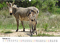 BERGZEBRAS Impressionen aus Südafrika (Wandkalender 2019 DIN A3 quer) - Produktdetailbild 2