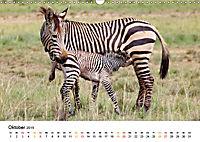 BERGZEBRAS Impressionen aus Südafrika (Wandkalender 2019 DIN A3 quer) - Produktdetailbild 10