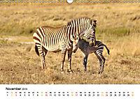 BERGZEBRAS Impressionen aus Südafrika (Wandkalender 2019 DIN A3 quer) - Produktdetailbild 11
