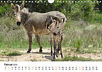 BERGZEBRAS Impressionen aus Südafrika (Wandkalender 2019 DIN A4 quer) - Produktdetailbild 2