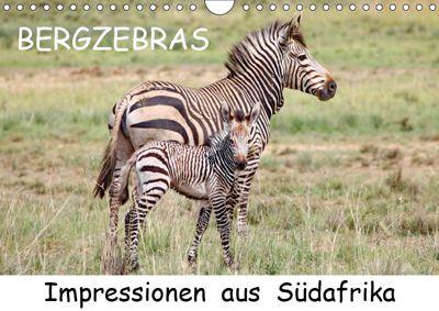 BERGZEBRAS Impressionen aus Südafrika (Wandkalender 2019 DIN A4 quer), Thula