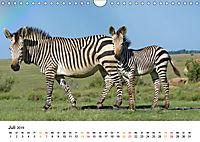 BERGZEBRAS Impressionen aus Südafrika (Wandkalender 2019 DIN A4 quer) - Produktdetailbild 7