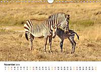 BERGZEBRAS Impressionen aus Südafrika (Wandkalender 2019 DIN A4 quer) - Produktdetailbild 11