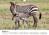 BERGZEBRAS Impressionen aus Südafrika (Wandkalender 2019 DIN A4 quer) - Produktdetailbild 10