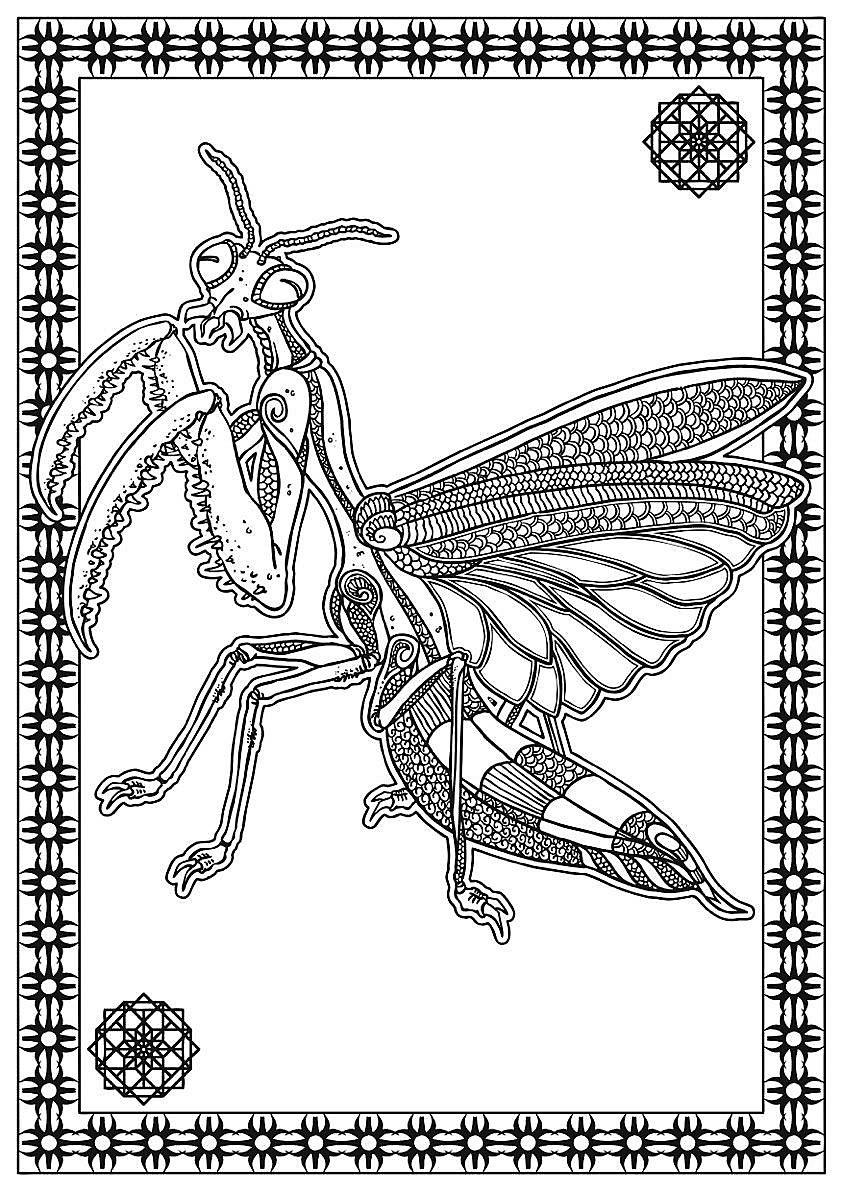Bestiarium - A Dark Colouring Book Buch bei Weltbild.de bestellen