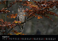 Beutegreifer (Wandkalender 2019 DIN A2 quer) - Produktdetailbild 8