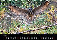 Beutegreifer (Wandkalender 2019 DIN A2 quer) - Produktdetailbild 6