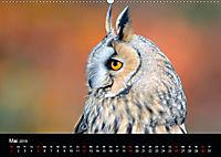 Beutegreifer (Wandkalender 2019 DIN A2 quer) - Produktdetailbild 5