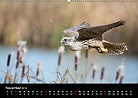 Beutegreifer (Wandkalender 2019 DIN A2 quer) - Produktdetailbild 11