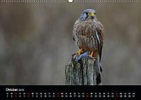 Beutegreifer (Wandkalender 2019 DIN A2 quer) - Produktdetailbild 10