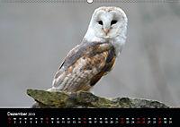 Beutegreifer (Wandkalender 2019 DIN A2 quer) - Produktdetailbild 12