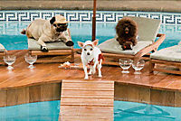 Beverly Hills Chihuahua - Produktdetailbild 10