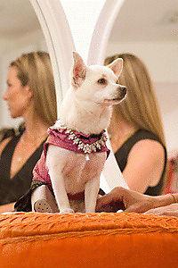 Beverly Hills Chihuahua - Produktdetailbild 6