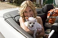 Beverly Hills Chihuahua - Produktdetailbild 4