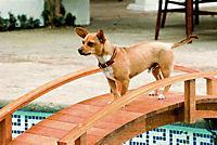 Beverly Hills Chihuahua - Produktdetailbild 2