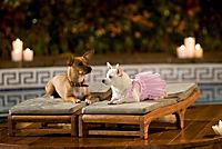 Beverly Hills Chihuahua 1-3 Box - Produktdetailbild 1