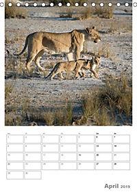 BIG CATS - Namibias Raubkatzen (Tischkalender 2019 DIN A5 hoch) - Produktdetailbild 4