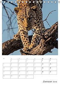 BIG CATS - Namibias Raubkatzen (Tischkalender 2019 DIN A5 hoch) - Produktdetailbild 1