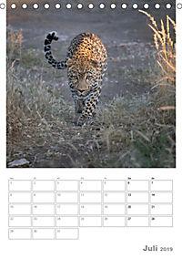 BIG CATS - Namibias Raubkatzen (Tischkalender 2019 DIN A5 hoch) - Produktdetailbild 7