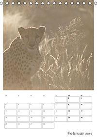 BIG CATS - Namibias Raubkatzen (Tischkalender 2019 DIN A5 hoch) - Produktdetailbild 2